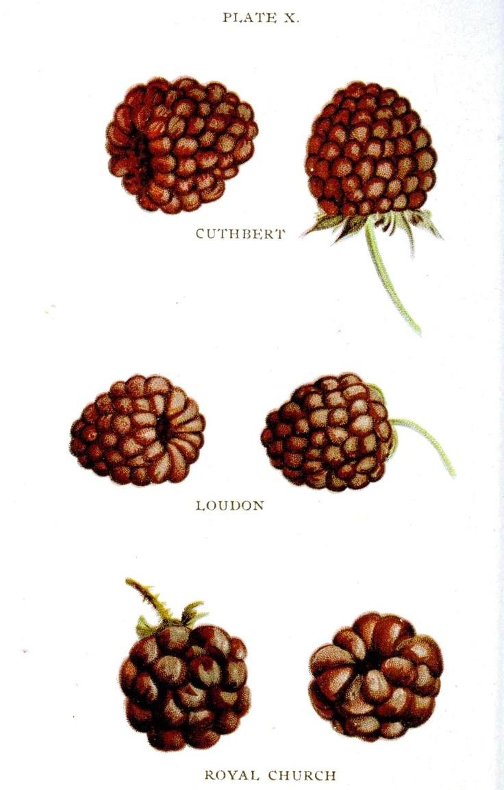 122 best Botanical Anatomy images on Pinterest | Botanical drawings ...