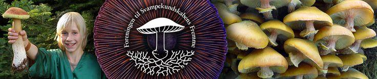 Foreningen til Svampekundskabens Fremme | Danish Mycological Society