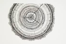 tree rings tattoo - Google Search                                                                                                                                                                                 More