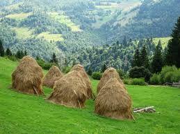 haystacks in Transylvania