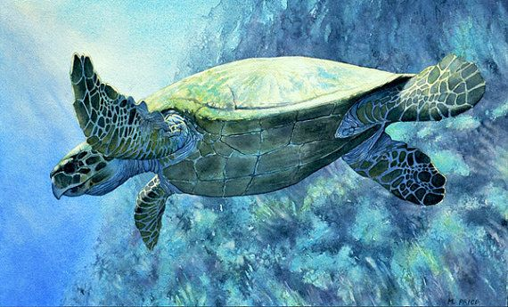 ORIGINAL Ocean Art Sea Turtle Marine WildlIfe Aquatic Sea Life