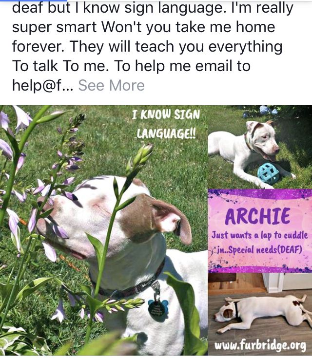 Archie Deaf But Knows Sign Language Needs Help To Get Out Of There Why Do Cats Purr Nyc Dogs Staten Island New York
