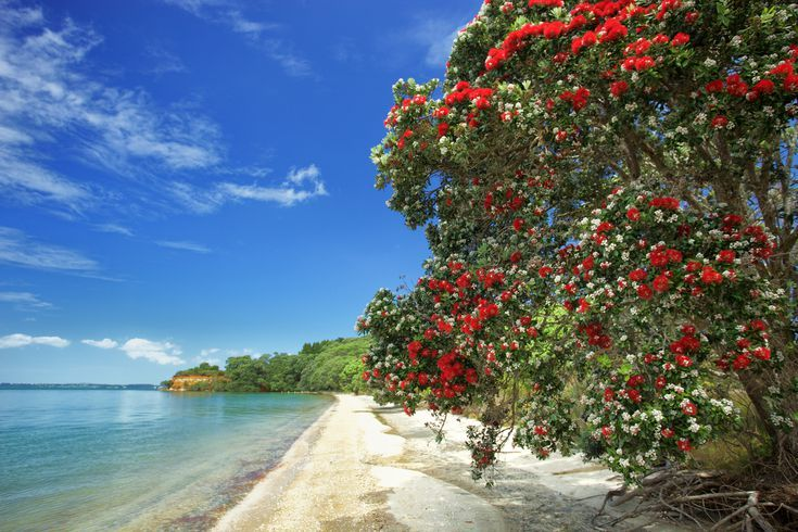 Your Trip To New Zealand The Complete Guide In 2020 Christmas Float Ideas New Zealand Summer Christmas