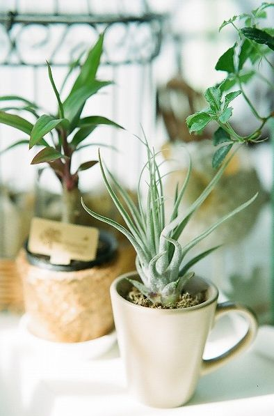 how to get rid of bugs in plants thats potted
