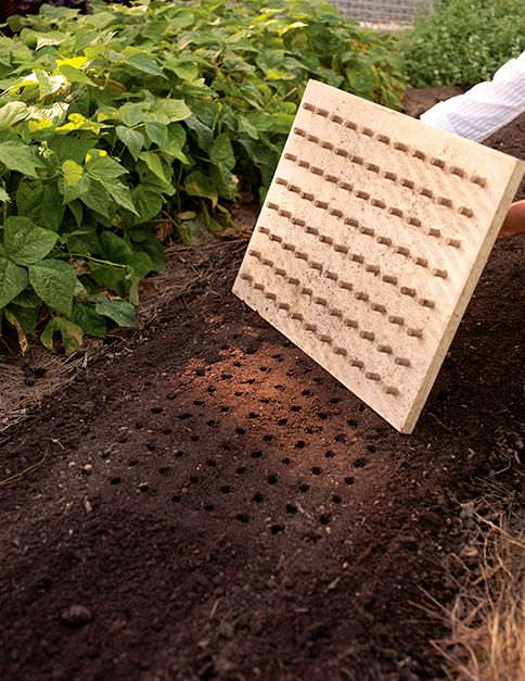 This dibble, inspired by the one Martha saw in her friend David Rockefeller's greenhouse, is used in the garden beds to make evenly spaced holes for crops such as lettuce and Asian greens.