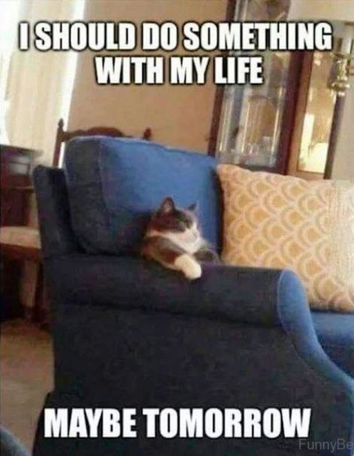 81 Funny Life Memes To Motivate And Inspire You In 2020 Life Is Good Funny Cat Memes Kitten Quotes Cat Memes