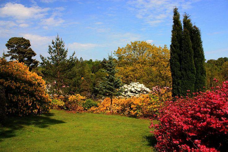 10 tipos de jardín y sus características | Cuidar de tus plantas es facilisimo.com