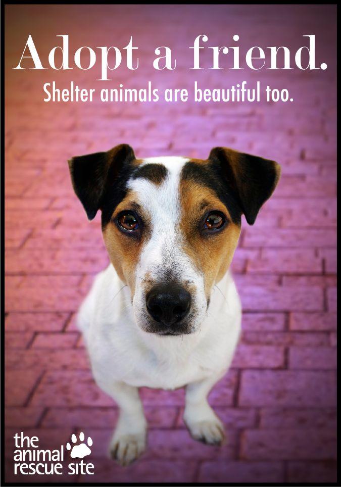 The Animal Rescue Site Animal rescue, Animals
