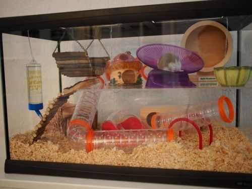 Diy Tank Cage Google Search Hamster Cages