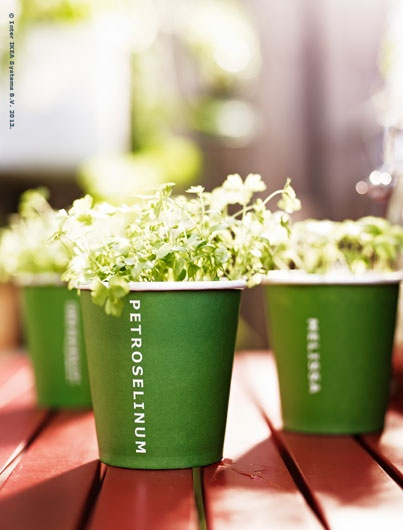 FRÖER growing set contains everything  you need to grow 3 different herbs.