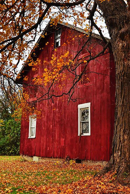 Red Barn in Autumn coupon code nicesup123 gets 25 off at