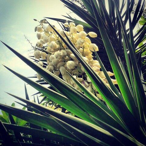 Blooming joy.... «»