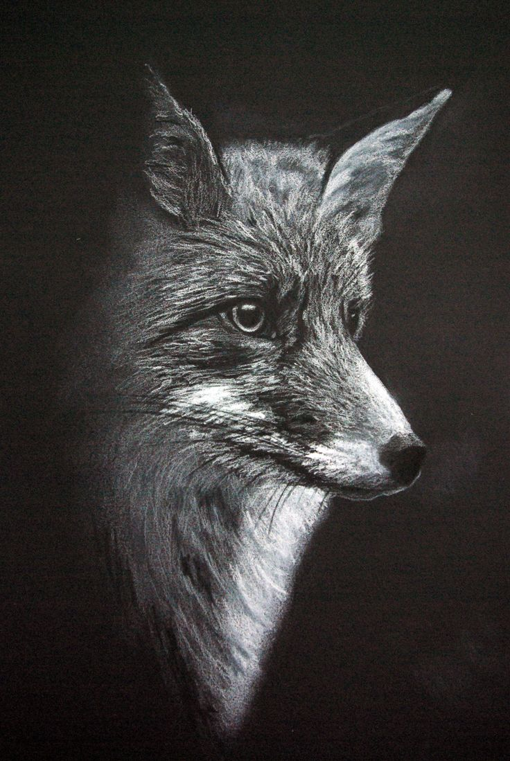 Fox. White on black. By Fiona Ansink
