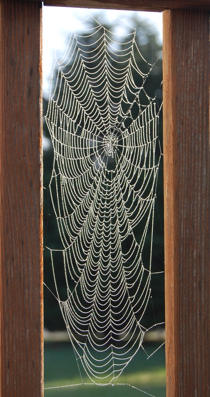 Dewy Spiderweb taken by M Rojas