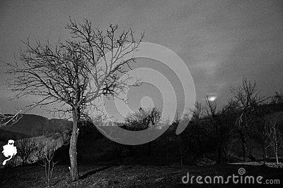 The Ghost Of Night - Download From Over 42 Million High Quality Stock Photos, Images, Vectors. Sign up for FREE today. Image: 68855027
