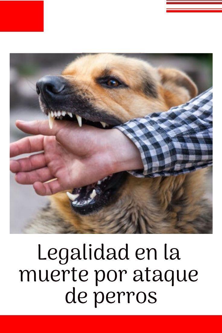 Legalidad En La Muerte Por Ataque De Perros En Los Casos De Ataques De Perros A Personas La Situación Más Gr Perros Comportamiento Canino Cuidado Con El Perro