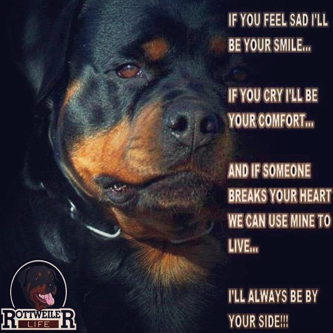 This goes for rotties and all dogs bc thats what dogs are. Loyal and full heartedly Loving