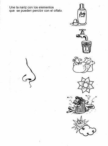 5 smyslů - čich