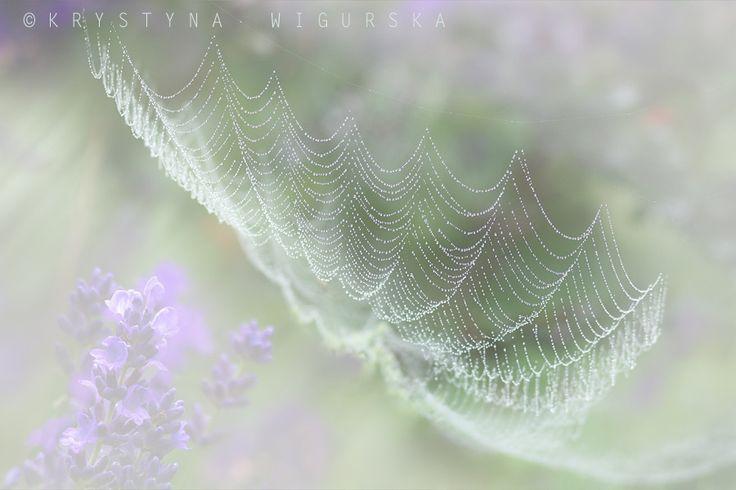 Photograph We mgle... by Krystyna Wigurska on 500px