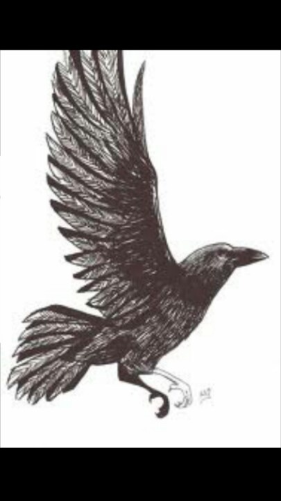 Hopefully getting my crow tattoo soon , would love something with the wings spread open .