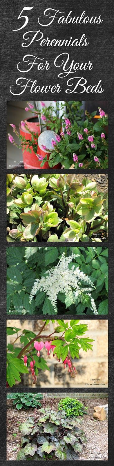 Great perennials to use in your flower beds this year that go beyond the run of the mill