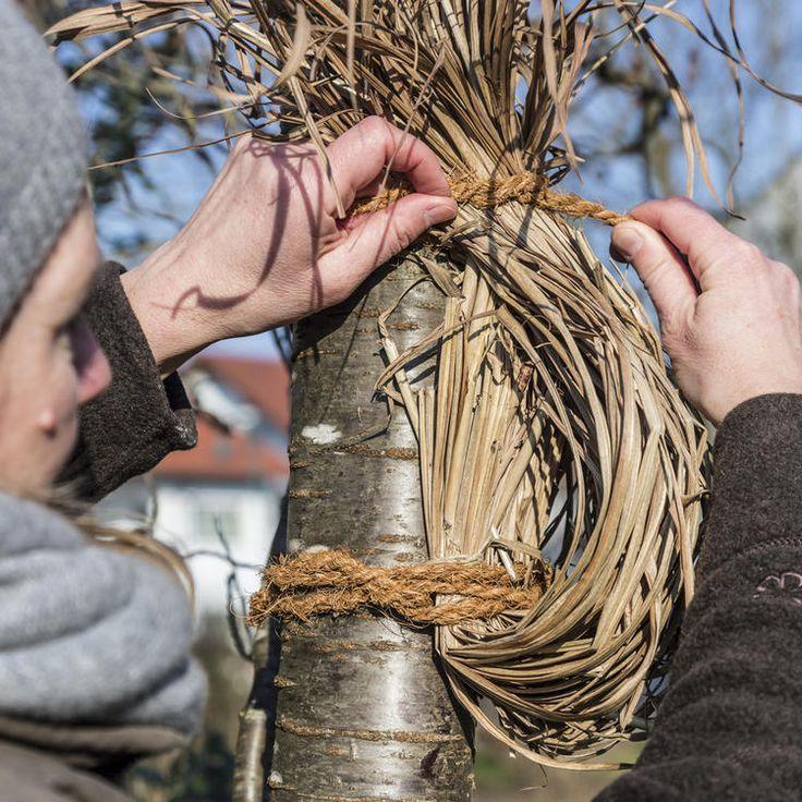 Statt einem Vogelhaus oder Nistkasten, kann man für Rotkehlchen eine Nisthilfe … – Garten