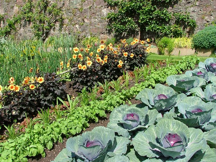 Garden Ideas Scotland 139 best warzywnik images on pinterest | gardening, edible garden