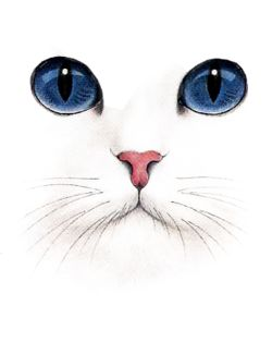Imagem de cat, blue, and white