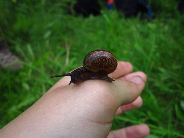 Just a snail.)