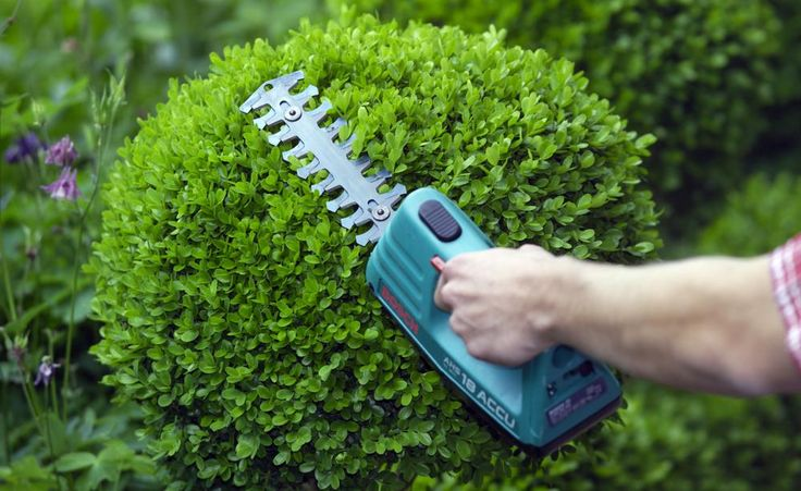 Wer sich Buchsbaum in den Garten pflanzt, sollte sich gleich eine gute Gartenschere besorgen – denn erst, wenn man ihn regelmäßig schneidet, kommt der immergrüne Strauch im Garten so richtig zur Geltung.