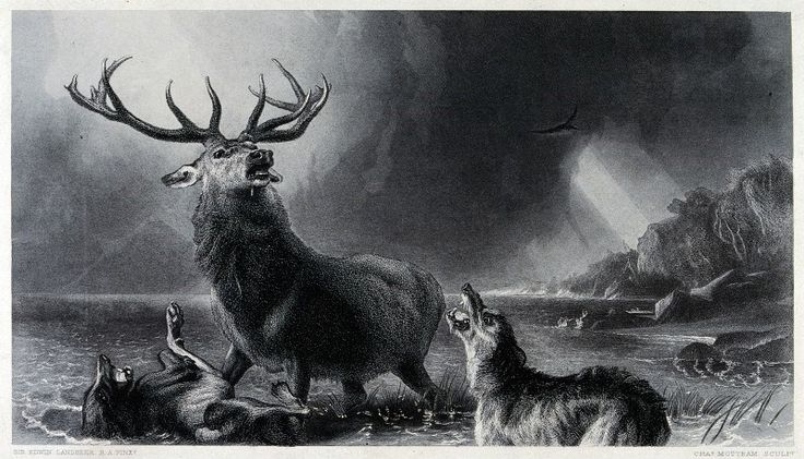 A wounded stag is attacked by two dogs in the water by C. Mottram after E. H. Landseer. The Wellcome Library, CC-BY