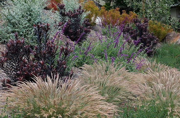 Michelle Derviss design plant list : leucadendron ebony, salvia leucantha, teucrium chamadry and fruiticans, euphorbia martinii, olives and calamogrotis .