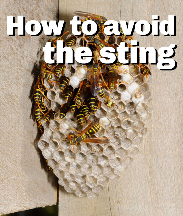 how to keep wasps away from milkweed