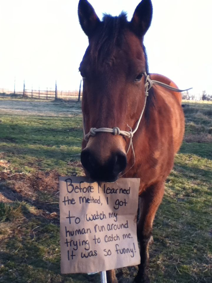 "No Worries Club Contest Entry ""Horse Shaming"""