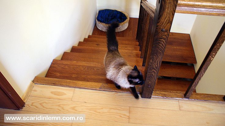 scari din lemn masiv vang modular mana curenta balustrii pret calitate