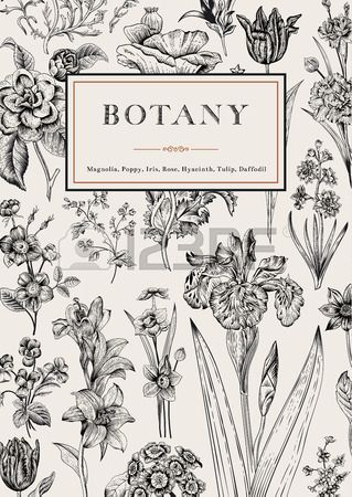 Botany. Vintage floral card. Vector illustration of style engravings. Black and white flowers.