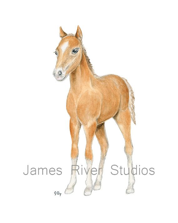 Horse Art Horse Painting Horse Print. Horse by JamesRiverStudios