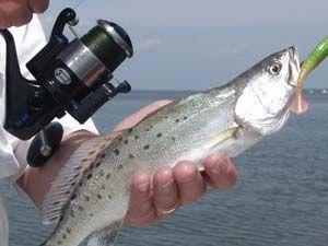 Choosing Saltwater Gear: Spinning or Baitcasting