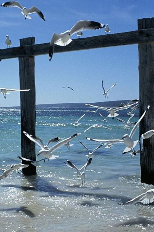 flock of seagulls..http://tinyurl.com/hd8by6l