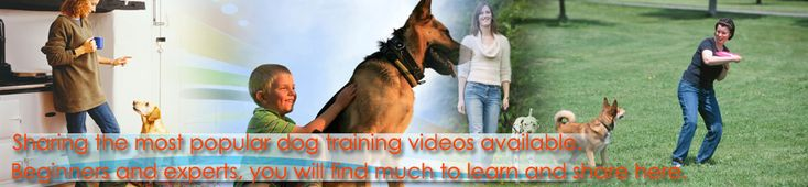 The Best Dog Training Videos