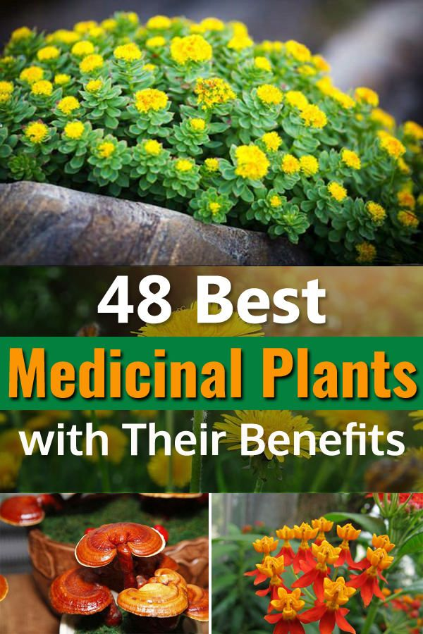 48 Best Medicinal Plants With Their Benefits Medicinal Plants