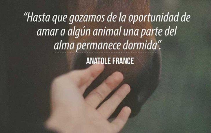 anatole-1