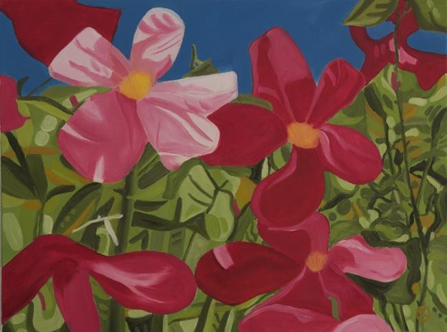 'Rosa odorata 'Mutabilis'' oil on canvas 450x600mm. Now sold.