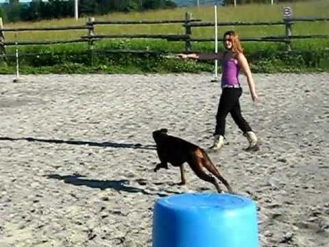 Barrel Racing Dog! Gee I wish my HORSE would do this!