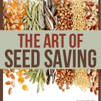 I recently learned about seed saving via a Kickstarter trailer for a documentary entitled, Seeds: The Untold Story.What is seed saving, you say? It's exactly what it sounds like! It is the process of saving seeds for future harvests, a process that has been done for over ten thousands years.  The seed saving practice