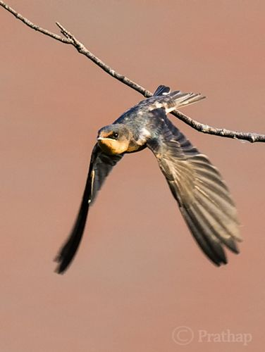 10 Incredible Bird Photography Tips for Beginners. A Post By: Prathap DK. http://devis-france-demenagement.fr/