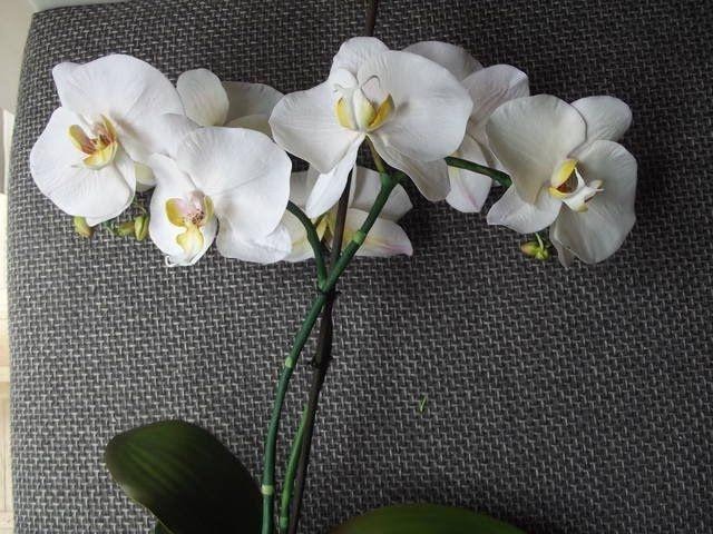 Орхидея Фаленопсис МК от Риты. Холодный фарфор. В этом видео я покажу как я делаю орхидею Фаленопсис. Мастер-классы по handmade, цветы из фоамирана полимерной глины, холодного фарфора, идеи для творчества у нас в группе https://vk.com/tsveto_maniya