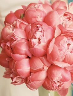 Coralish-colored gorg peonies