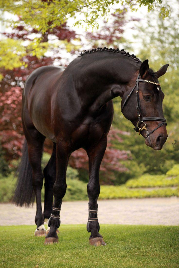 Black stallion Delgado's Defender