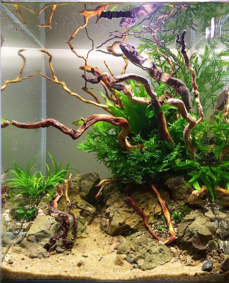 Aquascaping Aquascaping Planted Tanks Aquariums Pinterest Aqu 225 Rios Terr 225 Rios E